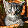 Kittens Slideshow & Wallpapers (HD)